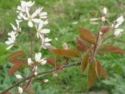 Bosplantsoen & singelbeplanting